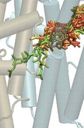 Enzyme Function Initiative Publishes Seminal Paper in PNAS. Photo copyright (2013) National Academy of Sciences, USA.