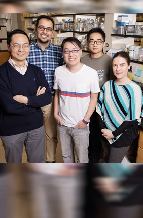 Illinois researchers created a system using CRISPR technology to selectively turn off any gene in Saccharomyces yeast. Pictured, from left: chemical and biomolecular engineering professor Huimin Zhao, graduate students Mohammad Hamedi Rad, Zehua Bao, Pu Xue and Ipek Tasan.